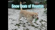 Snow Dogs of Houston graphic